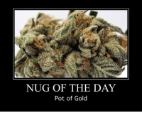 pot of gold: NUG OF THE DAY  Pot of Gold