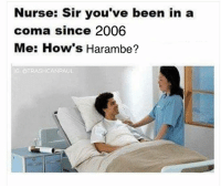 I promise you this is the last Harambe meme ever @trashcanpaul: Nurse: Sir you've been in a  coma since 2006  Me: How's Harambe?  IG: @TRASH CANPAUL I promise you this is the last Harambe meme ever @trashcanpaul