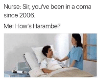 dead meme reincarnation: Nurse: Sir, you've been in a coma  since 2006  Me: How's Harambe? dead meme reincarnation
