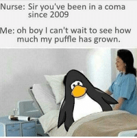 Memes, Good, and Today: Nurse: Sir you've been in a coma  Since 2009  Me: oh boy I can't wait to see how  much my puffle has grown. i hope everyone's having a good day today! except for terfs. y'all can choke.