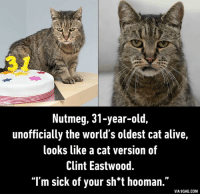 oldest cat