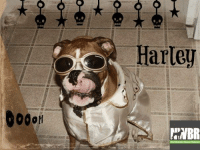 """NWBR Alum Harley would like to """"thank you, thank you very much..."""" for your support of NWBR!: NWBR Alum Harley would like to """"thank you, thank you very much..."""" for your support of NWBR!"""