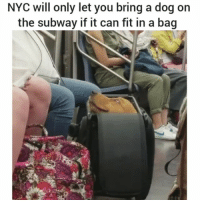 😂 😂 😂 (u-fizrock) | follow @fuckersbelike for more: NYC will only let you bring a dog on  the subway if it can fit in a bag 😂 😂 😂 (u-fizrock) | follow @fuckersbelike for more