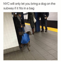 Problem solved: NYC will only let you bring a dog on the  subway if it fits in a bag Problem solved