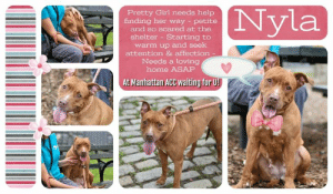 Children, Dogs, and Energy: (Nyla  Pretty Girl needs help  finding her way petite  and so scared at the  shelter Starting to  warm up and seek  attention & affection  Needs a loving  home ASAP  At Manhattan ACC waiting for U! TO BE KILLED - 6/22/2019   WHERE DID THIS CUTIE COME FROM? It seems no one knows. She was found tied to a building and then brought in as a stray by a good samaritan (she was friendly with her finder, by the way) and no one has come to claim her. Now Nyla is out of time and sitting on the euth list. She's scared, anxious and unsure like all dogs in a strange place without their family. Nyla seems fearful of the walking leash for some reason but after a little time and coaxing she finally approaches staff and takes a nice walk where she eventually settles down and will sit on the bench with her handler and lean in for some attention and affection. Nyla will warm up nicely and come out of her shell in the loving hands of a kind and caring master. Please help us share this 3 year old girl for a second chance at life and family. Nyla doesn't only need a home. She needs to know she's safe and secure.   NYLA@MANHATTAN ACC Hello, my name is Nyla My animal id is #65851 I am a female brown dog at the  Manhattan Animal Care Center The shelter thinks I am about 3 years old, 47 lbs  Came into shelter as a stray 6132019 Nyla is rescue only   Nyla is at risk for behavioral reasons. Nyla has exhibited distance increasing behaviors while at the care center and has remained fearful. Due to the anxious behaviors, Nyla would be best suited for placement with a new hope partner that can provide the necessary behavior modification. Medically, Nyla seems healthy.  My medical notes are... Weight: 47.4 lbs Vet Notes 6/16/2019 DVM Intake Exam Estimated age: 3 years Microchip noted on Intake? History : Brought in by good Samaritan; dog found tied up outside building Subjective: fearful Observed Behavior - fearful- needs sedation to examine Evidence of Cruelty seen - no 