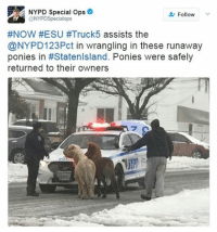Memes, Nypd, and 🤖: NYPD Special Ops  Follow  @NYPD Special ops  #NOW #ESU #Truck 5 assists the  @NYPD123Pct in wrangling in these runaway  ponies in #Statenlsland. Ponies were safely  returned to their owners SPOTTED: Looks like the @NYPD was on PonyPatrol today! snowday