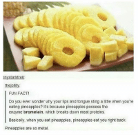 Memes, Weird, and Sting: nystarktrek  thejollity  FUN FACT!  Do you ever wonder why your lips and tongue sting a little when you're  eating pineapples? It's because pineapples possess the  enzyme bromelain, which breaks down meat proteins  Basically, when you eat pineapples, pineapples eat you right back  Pineapples are so metal. dis so weird
