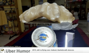Omg, Tumblr, and Uber: O Aileen Cynthia Amurao/SWNS.com  4232  Uber Humor 2013, ail no tying ars Insead, blankets with sleeves omg-images:  Fisherman found this two-foot-long pearl which weighs ~75 lbs. inside a giant clam ten years ago. He kept it under his bed ever since. It may be worth $100 Million