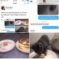 "Lol, Memes, and At&t: ....o AT&T LTE  8:51 AM  77%  Tweet  Chase Stout  @Chaser Stout  When your girlfriend goes out of town  and tells you ""don't forget to feed our  cat  Do you Wisonikes  chocolate chics his pancakes  uu did you give him some  K 43  Kenzie Jones  V  Do you know if Wilson likes  chocolate chips in his pancakes  Today 9:01 AM  did you give him some?  Would you be mad if did  No lol His name is Wilson"