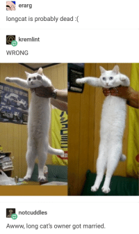 Ancient Meme History Revisited: o erarg  longcat is probably dead:  kremlint  WRONG  notcuddles  Awww, long cat's owner got married. Ancient Meme History Revisited
