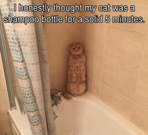 Funny Pictures Of The Day - 36 Pics - Daily LOL Pics: O honestly thought my cat was a  shampoo bottle for a solid 5 minutes. Funny Pictures Of The Day - 36 Pics - Daily LOL Pics