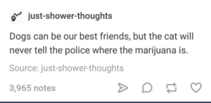 Cats, Dogs, and Friends: o just-shower-thoughts  Dogs can be our best friends, but the cat will  never tell the police where the marijuana is.  Source: just-shower-thoughts  3,965 notes thats why we should love cats