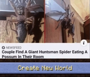 Ight imma head out: O NEWSFEED  Couple Find A Giant Huntsman Spider Eating A  Possum In Their Room  Create New Horld Ight imma head out