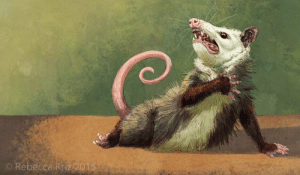 "Tumblr, Blog, and Com: O Rebecca Kriz 2015 branwyn-says:  dadalux: ""Amateur Opossum Actress"" by Rebecca Kriz I object to the diminishment of this opossum's OBVIOUS theatrical skill and training"