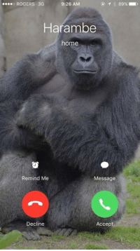 RT @HarambeDepot: RT if you'd pick up: o ROGERS 3G  9:26 AM  Harambe  home  Remind Me  Message  Decline  Accept RT @HarambeDepot: RT if you'd pick up