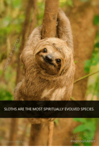 Sloth: o  SLOTHS ARE THE MOST SPIRITUALLY EVOLVED SPECIES.  ,02015 wwwtsputh.de  PHOTOGRAPHY