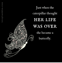 Life, Memes, and Butterfly: O.  SO  Just when the  caterpillar thought  HER LIFE  WAS OVER  she became a  butterfly.