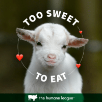 """Compassion, League, and All: o SWE  the humane league"""" Compassion For ALL!"""