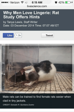Bad, Love, and Tumblr: o Verizon  6:19 AM  livescience.comm  Why Men Love Lingerie: Rat  Study Offers Hints  by Tanya Lewis, Staff Writer  Date: 03 December 2014 Time: 07:07 AM ET  Like  1.3k  Tweet  Male rats can be trained to find female rats sexier when  clad in tiny jackets.  CREDIT: Gonzalo R. Quintana Zunino strixobscuro: mysharona1987: I feel bad for the scientists who spent years and years getting their degrees only to eventually end up dressing up rats in lingerie.  On the plus side, they have a way more interesting response when someone asks what they do for a living.