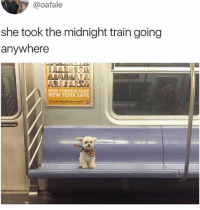 Funny, Lean, and Meme: @oafale  she took the midnight train going  anywhere  NEW YORKERS KEEP  NEW YORK SAFE  T00141  t lean on door @_kevinboner