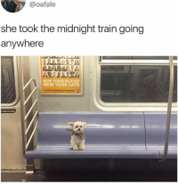 Cute, Lean, and Memes: @oafale  she took the midnight train going  anywhere  NEW YORKERS KEEP  NEW YORK SAFE  t lean on door Cute doggo