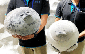 Tumblr, Aquarium, and Blog: oANA ADUAR A  NA catchymemes:  Osaka Aquarium just stepped up their gift shop game with these fat seal plushies  Cojines foca, muy japonés