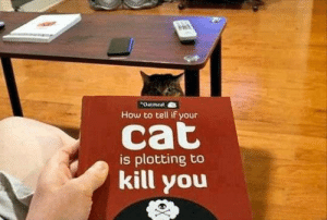 Tumblr, Blog, and Book: Oatmeal  How to tell if your  is plotting to  kill you novelty-gift-ideas:  How to Tell If Your Cat Is Plotting to Kill You Book
