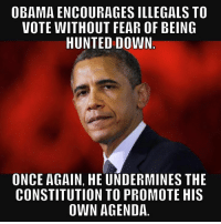 Memes, Hunting, and Constitution: OBAMA ENCOURAGES ILLEGALS TO  VOTE WITHOUT FEAR OF BEING  HUNTED DOWN  ONCE AGAIN, HE UNDERMINES THE  CONSTITUTION TO PROMOTE HIS  OWN AGENDA ~ Punisher ~