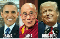 FWD: Rock n Roll: OBAMA  LAMA  DING-DONG FWD: Rock n Roll