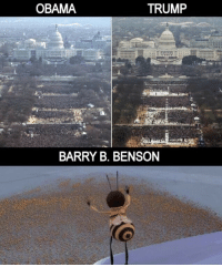 Obama, Trump, and Barry: OBAMA  TRUMP  BARRY B. BENSON