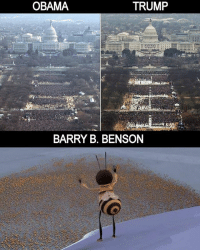 Funny, Obama, and Trump: OBAMA  TRUMP  BARRY B. BENSON Real recognizes real