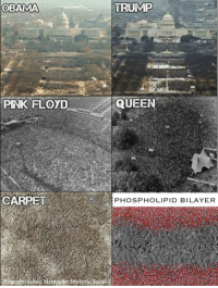 Memes, Obama, and Pink Floyd: OBAMA  TRUMP  PINK FLOYD  QUEEN  CARPET  PHOSPHOLIPID BILAYER Happy Fourth of July!