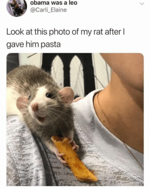 Hehe: obama was a leo  @Carli_Elaine  Look at this photo of my rat afterI  gave him pasta Hehe