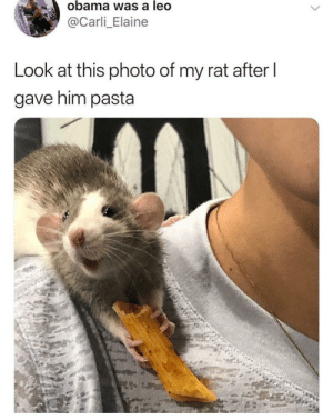pure happiness: obama was a leo  @Carli_Elaine  Look at this photo of my rat after l  gave him pasta pure happiness