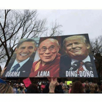 Best, Sign, and Dong: OBAMALAMA DING-DONG BEST SIGN EVER!!!