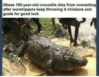 "Anaconda, Dank, and Meme: Obese 100-year-old crocodile dies from overeating  after worshippers keep throwing it chickens and  goats for good luck <p>This is the way i wanna go via /r/dank_meme <a href=""http://ift.tt/2zSUupz"">http://ift.tt/2zSUupz</a></p>"