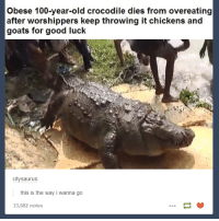 Anaconda, Good, and Old: Obese 100-year-old crocodile dies from overeating  after worshippers keep throwing it chickens and  goats for good luck  citysaurus  this is the way i wanna go  33,682 notes