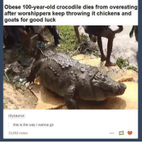 Me irl: Obese 100-year-old crocodile dies from overeating  after worshippers keep throwing it chickens and  goats for good luck  citysaurus  this is the way i wanna go  33,682 notes Me irl