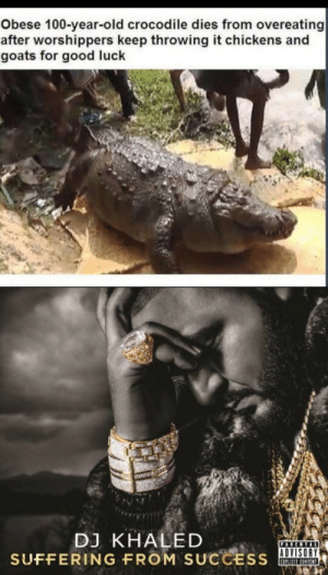 DJ Khaled, Good, and Content: Obese 100-year-old crocodile dies from overeating  after worshippers keep throwing it chickens and  goats for good luck  DJ KHALED  SUFFERING FROM SUCCESS  PARENTAL  EIPLICIT CONTENT