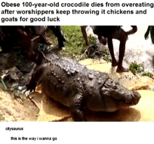 Me_irl: Obese 100-year-old crocodile dies from overeating  after worshippers keep throwing it chickens and  goats for good luck  citysaurus  this is the way i wanna go Me_irl