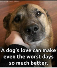 Degrassi: obin DeGrassi James  A dog's love can make  even the worst days  so much better.