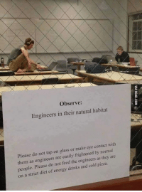 Energy, Memes, and Pizza: Observe:  Engineers in their natural habitat  Please do not tap on glass or make eye contact with  frigh  by normal  them as engineers are easily engineers  as they are  people. Please do not feed the pizza  on a strict of energy drinks and cold