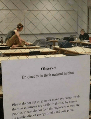Completely different animals: Observe:  Engineers in their natural habitat  Please do not tap on glass or make eye contact with  them as engineers are easily frightened by normal  people. Please do not feed the engineers as they are  on a strict diet of energy drinks and cold pizza Completely different animals