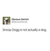 I FOLLOW THEM ON TWITTER IM AHAHA: Obvious Ostrich  @Obvious Ostrich  Snoop Dogg is not actually a dog I FOLLOW THEM ON TWITTER IM AHAHA