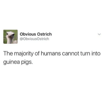 love this account 😂: Obvious Ostrich  @obviousOstrich  The majority of humans cannot turn into  guinea pigs. love this account 😂