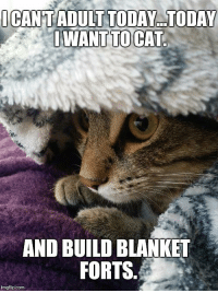 blanket forts: OCANTADULT TODAY.TODAY  AND BUILD BLANKET  FORTS.  imgflip.com