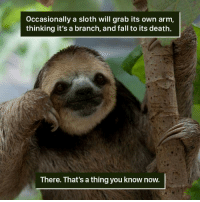 Sloth: occasionally a sloth will grab its own arm,  thinking it's a branch, and fall to its death.  There. That's athing you know now.
