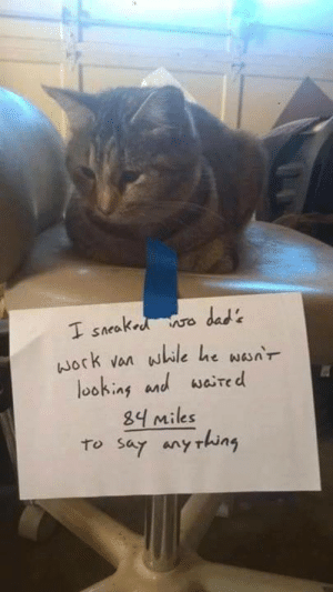 Cats, Love, and Via: ock van while he wsnr  loohing and waired  Miles  to sar any rhun Some cats do love you via /r/wholesomememes https://ift.tt/2E6HTme