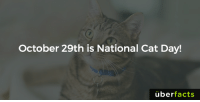 Happy National Cat Day! https://www.instagram.com/uberfacts/: October 29th is National Cat Day!  uber  facts Happy National Cat Day! https://www.instagram.com/uberfacts/