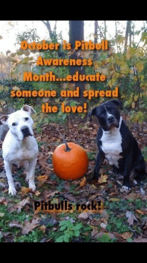 Yeah be aware: October is PirboIl W  Awareness  Month...educate  someone and spread  the love!  Pitbulls rock! Yeah be aware
